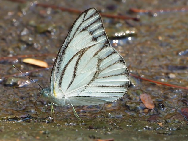 Butterfly close-up - Free image #225369