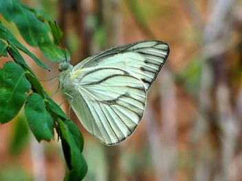 Butterfly close-up - Free image #225379