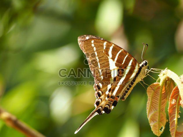 Бабочки крупным планом - бесплатный image #225389