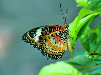 Butterfly close-up - image gratuit #225439