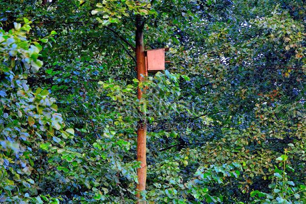 Birdhouse on the tree - Free image #229359