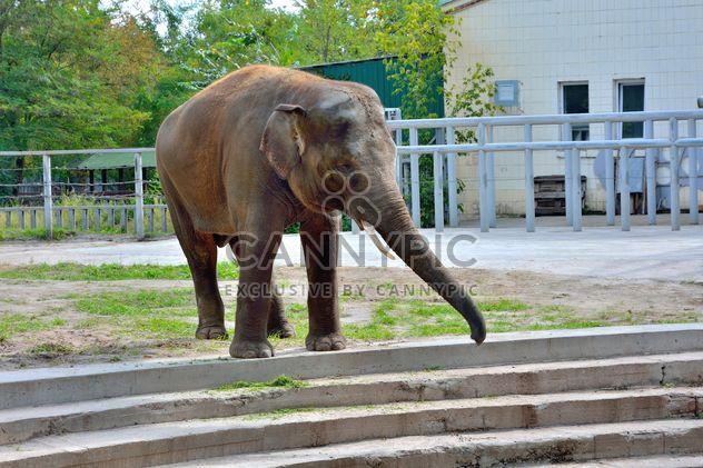 Слон - бесплатный image #229369