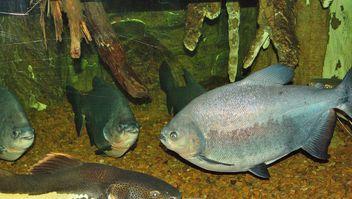 Aquarium - image #229409 gratis
