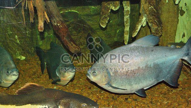 Aquarium - Kostenloses image #229409