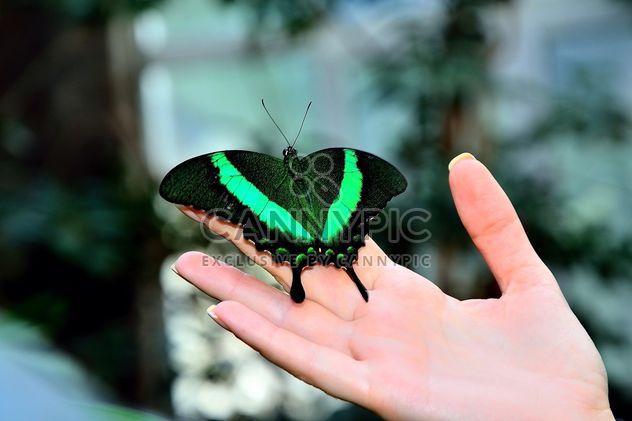Schmetterling - Free image #229449