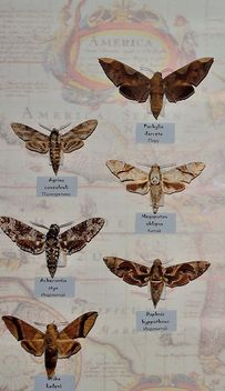 Collection of butterflies - image gratuit #229459
