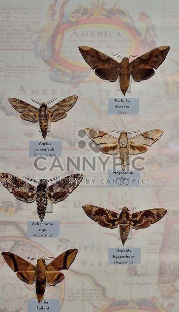 Coleção de borboletas - Free image #229459