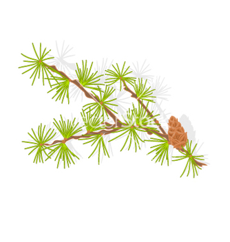 Free larch tamarack branch christmas tree vector - бесплатный vector #236609