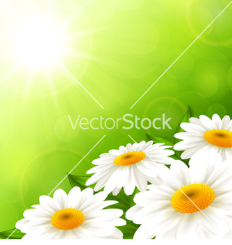 Free camomiles on a green background vector - Kostenloses vector #238849