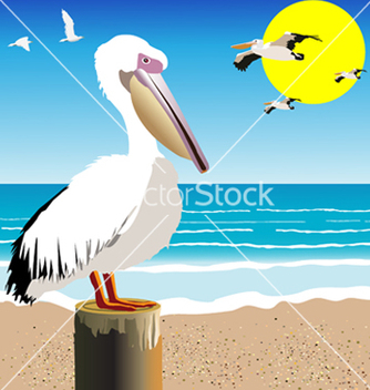 Free pelican watch vector - Free vector #242689