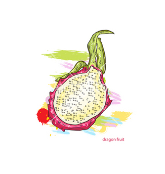 Free dragon fruit with colorful splashes vector - Free vector #243249