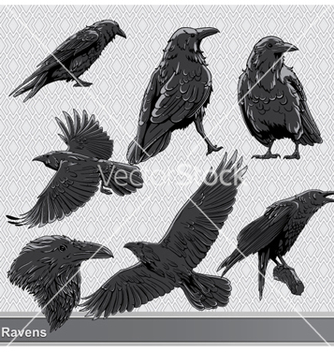 Free ravens set vector - Free vector #256509