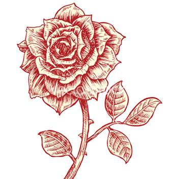 Free vintage rose vector - Free vector #262649