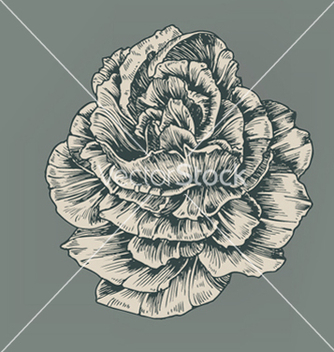 Free vintage rose vector - Free vector #263759