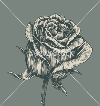 Free vintage rose vector - Free vector #265669