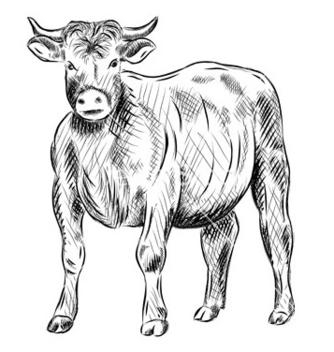 Free bull vector - Free vector #267569