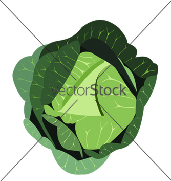Free cabbage vector - бесплатный vector #269869