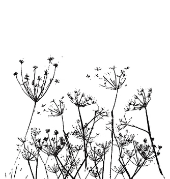 Free fennel flower vector - Free vector #271429