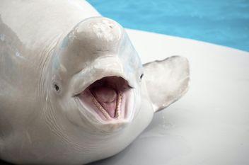 White whale:-) - image #271629 gratis