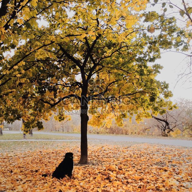 Autumn at the morning - Free image #271739