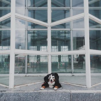 Dog in mask near building - image gratuit #271769
