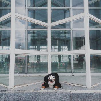 Dog in mask near building - бесплатный image #271769