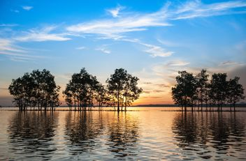 Trees growing from water - image #271829 gratis