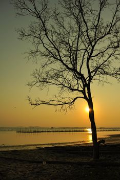 Tree at sunset - image #271899 gratis
