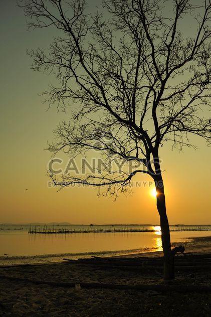 Arbre au coucher du soleil - image gratuit #271899