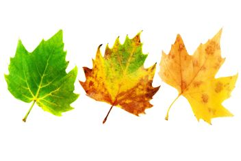 #goyellow leaves three green yellow - image gratuit #272589