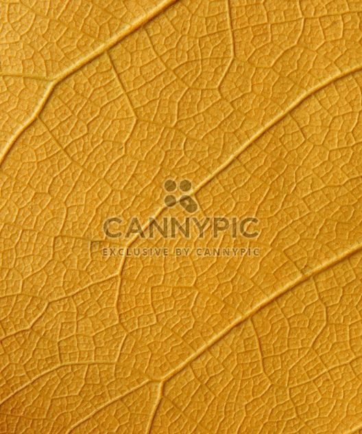 Yellow leaf backgroung - Free image #272609