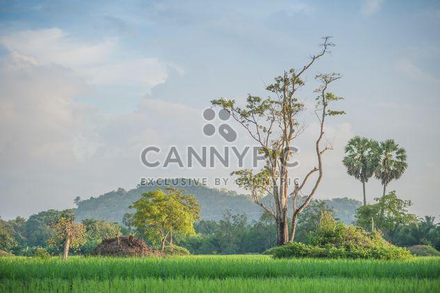 Рисовые поля - бесплатный image #272949