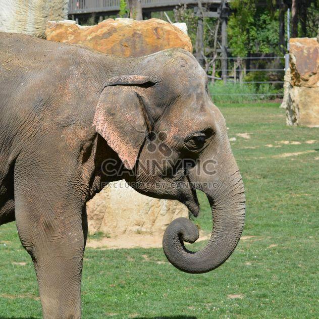 Слон в зоопарке - бесплатный image #274959