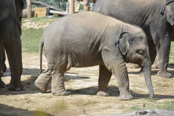 Elephant in the Zoo - image gratuit #274969