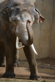 Elephant in the Zoo - image gratuit(e) #274979
