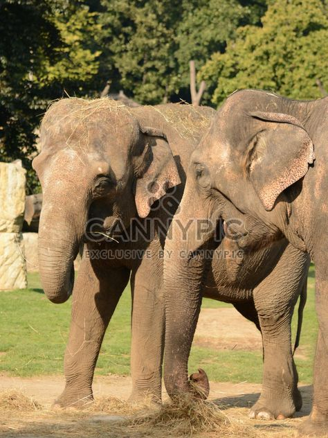 Слоны в зоопарке - бесплатный image #274999