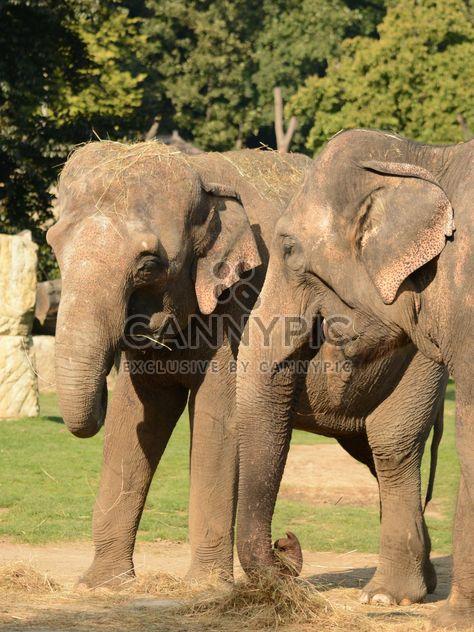 Elefanten im Zoo - Kostenloses image #274999