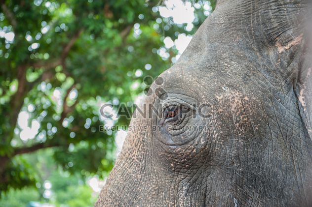 Elephant eye - Free image #275009