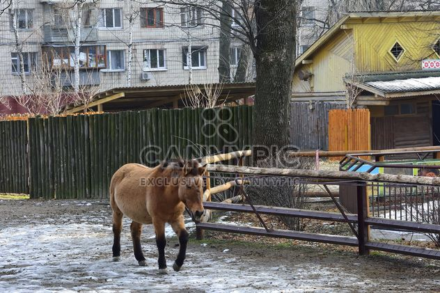 Cheval sauvage en th Zoo - image gratuit #275029