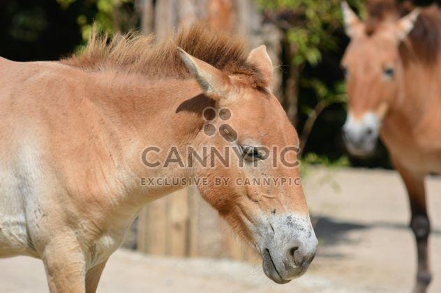 Braunes Pferd - Free image #275049