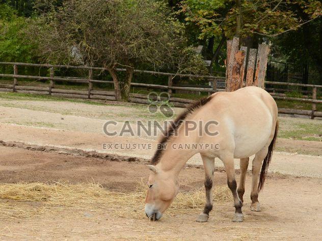 Brown horse - Free image #275059
