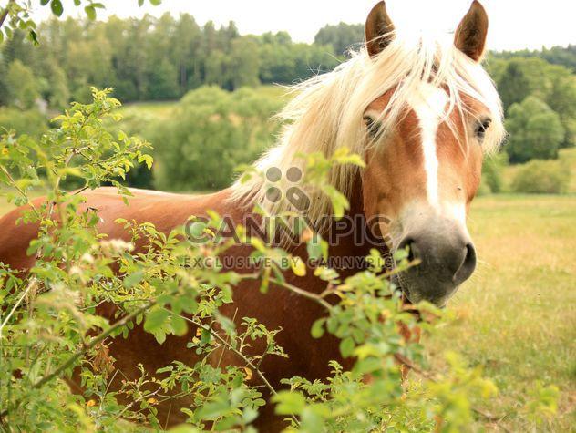 Cheval dans une ferme - image gratuit #275069