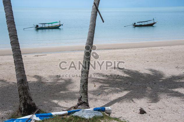 Пальмы на пляже - бесплатный image #275099