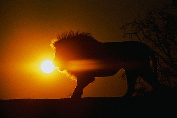 sunset - Kostenloses image #275339