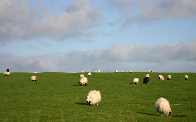 sheep - image gratuit #275379