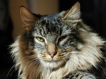 Cat Mandu - Free image #275559