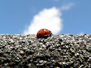 Ladybird (or Ladybug) on the roof - image gratuit(e) #276469