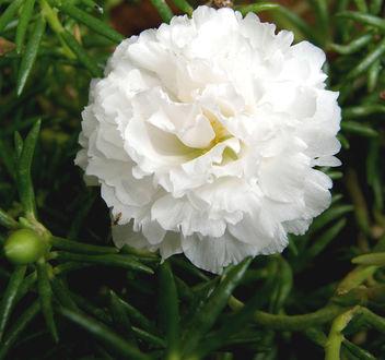 White flower - image #276949 gratis