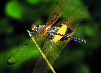 A Dragon Fly taking a break - image #277149 gratis
