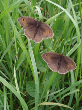 Butterflies On Green - Free image #277219